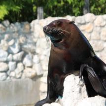 Zoo Parco Punta Verde